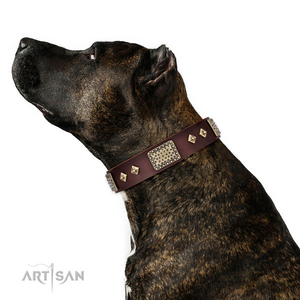 Reliable fancy walking dog collar of natural leather