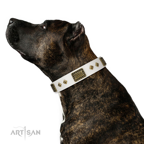 Comfy wearing dog collar of natural leather with stunning adornments