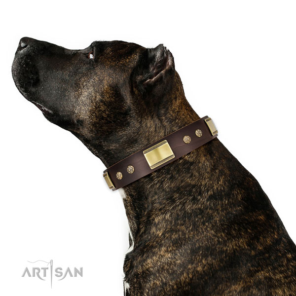 Everyday walking dog collar of natural leather with designer adornments