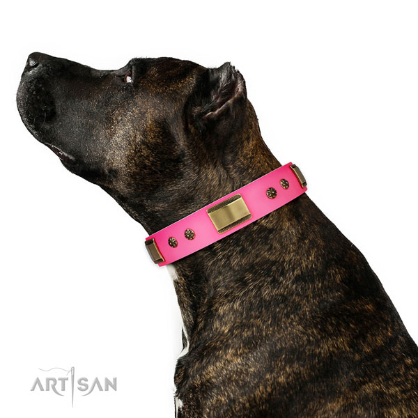 Walking dog collar of leather with unusual embellishments