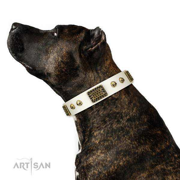 Reliable fittings on natural leather dog collar for basic training