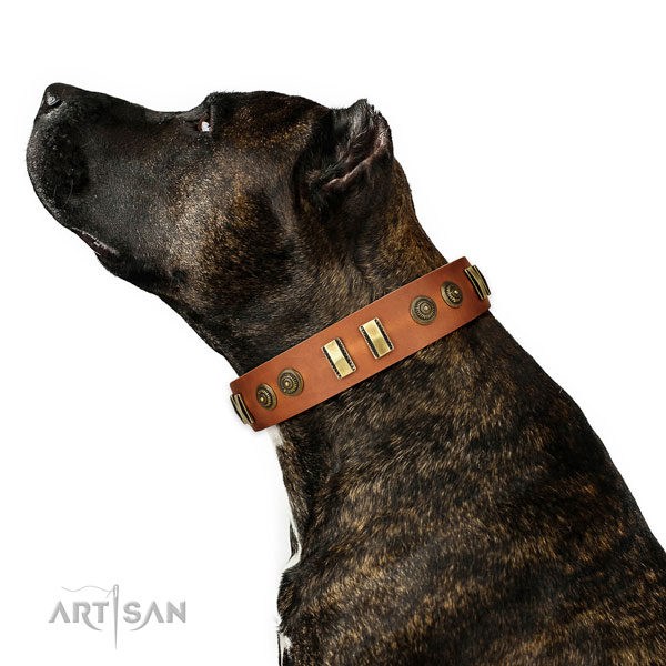 Corrosion resistant traditional buckle on natural leather dog collar for stylish walking