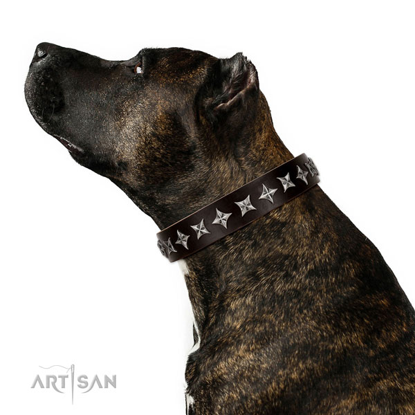 Everyday use decorated dog collar of top quality natural leather
