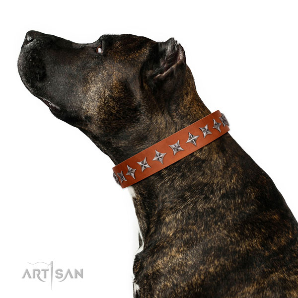 Finest quality genuine leather dog collar with top notch adornments