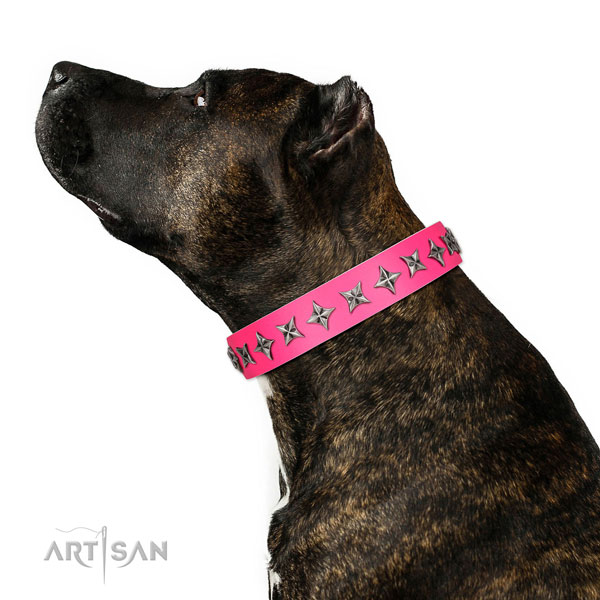 Finest quality full grain natural leather dog collar with exceptional adornments