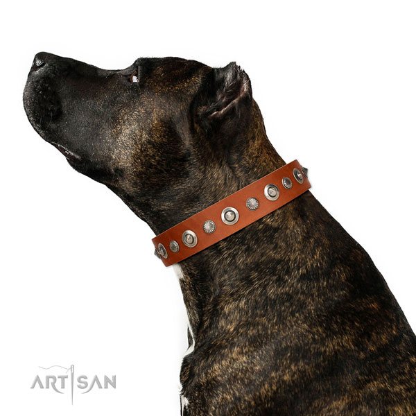 Finest quality full grain natural leather dog collar with fashionable adornments