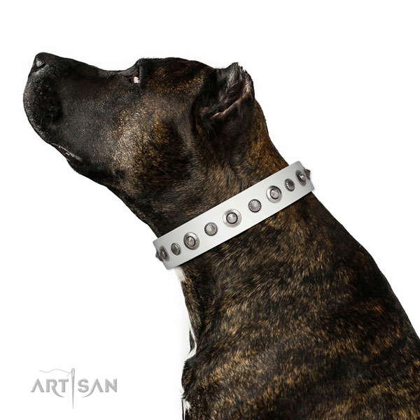 Genuine leather collar with corrosion resistant traditional buckle for your handsome canine