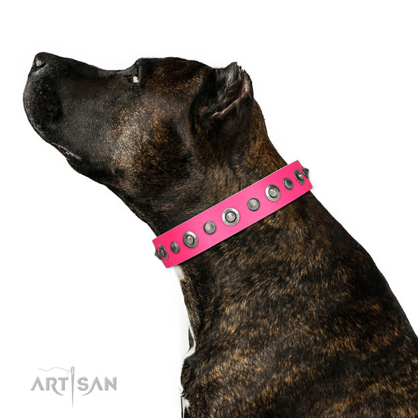 Full grain leather collar with corrosion resistant hardware for your impressive doggie