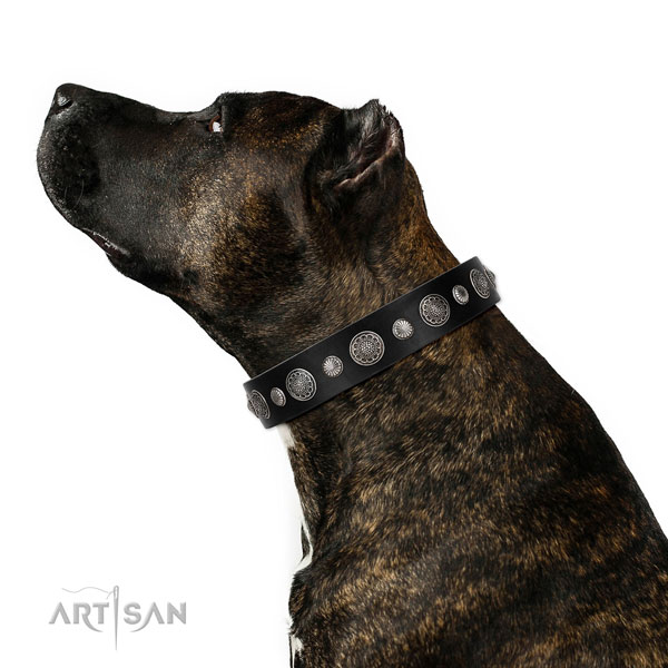 Full grain genuine leather collar with corrosion resistant D-ring for your beautiful dog