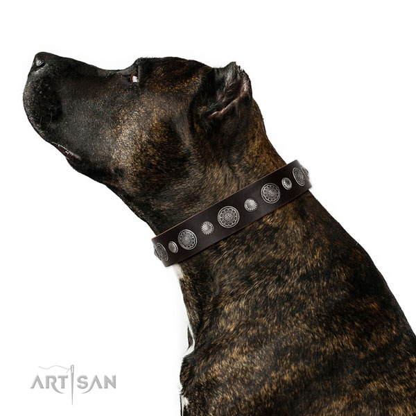 Handmade full grain leather dog collar with rust resistant fittings