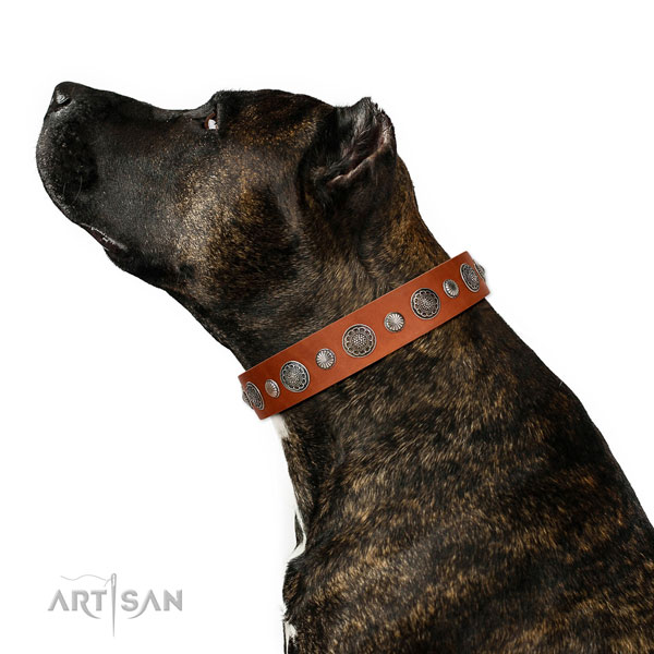Perfect fit full grain leather dog collar with rust resistant traditional buckle