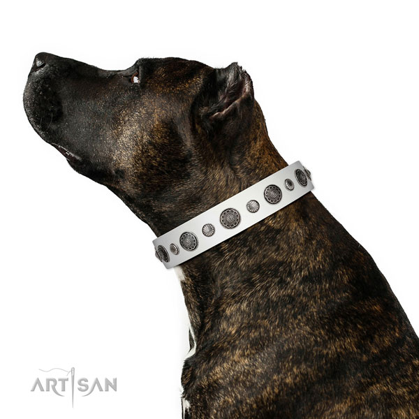 Easy wearing natural leather dog collar with corrosion resistant traditional buckle