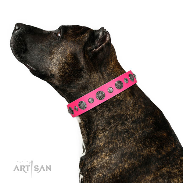 Designer full grain genuine leather dog collar with rust resistant fittings