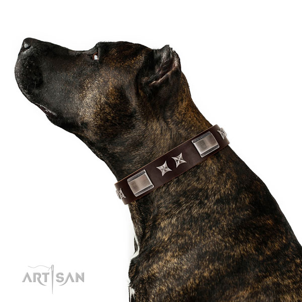 Top notch collar of natural leather for your beautiful canine