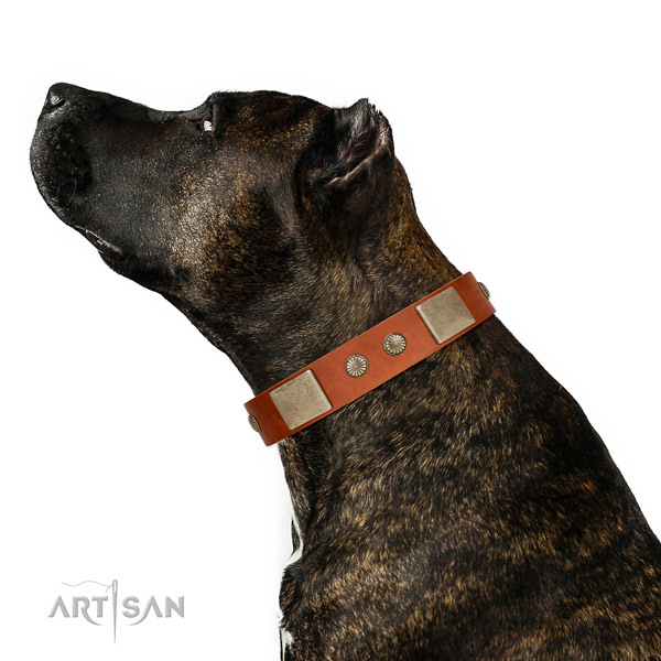 Corrosion resistant fittings on leather dog collar for daily use