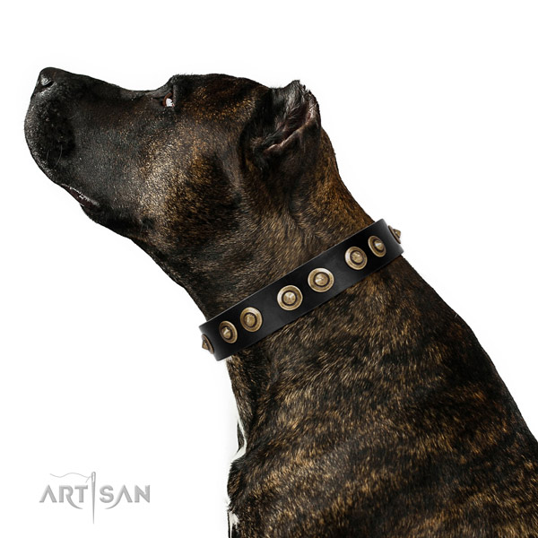Daily use dog collar of natural leather with incredible embellishments