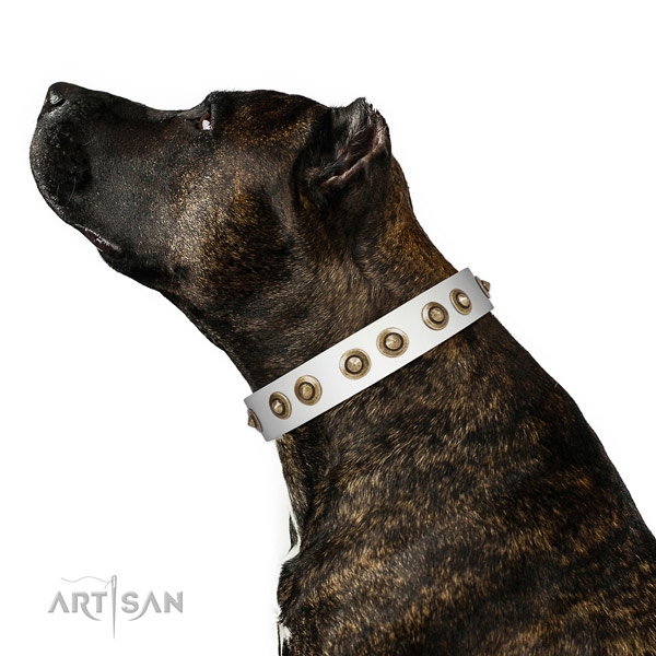 Stylish walking dog collar of genuine leather with top notch embellishments