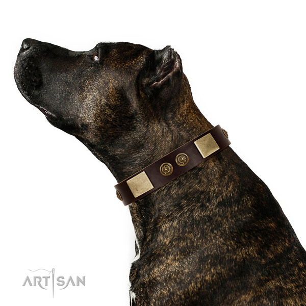Handy use dog collar of leather with significant adornments