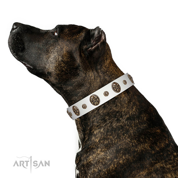 Fancy walking dog collar of genuine leather with fashionable embellishments