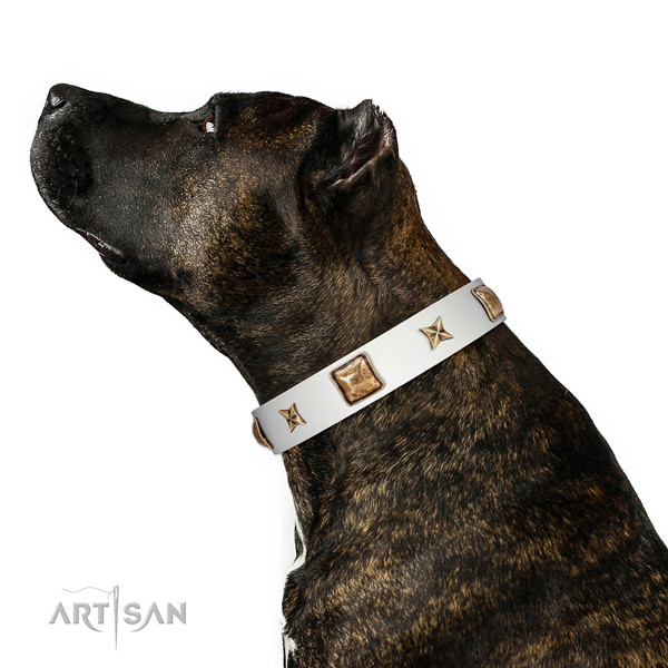 Stylish design full grain leather dog collar with embellishments