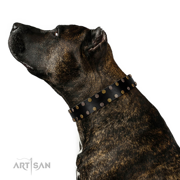 Unique leather dog collar with corrosion proof decorations