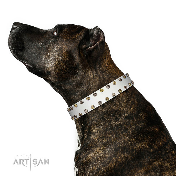 Remarkable full grain leather dog collar with strong adornments