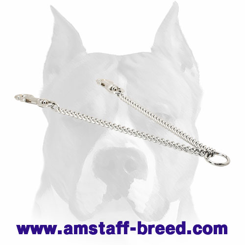 Amstaff Couple for Walking Dogs
