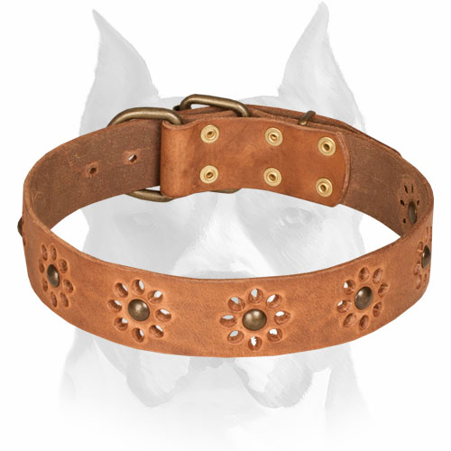 Amstaff Leather Collar for Walking in Style