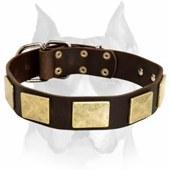Beautifully designed Amstaff leather dog collar with brass plates