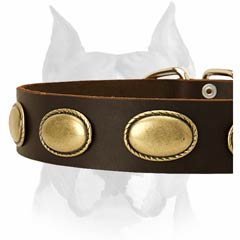 Multipurpose leather dog collar with brass plates