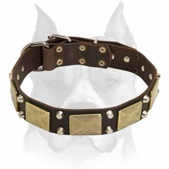 Amstaff breed leather dog collar for stylish breeds