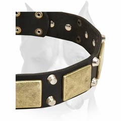 Perfect Amstaff breed dog collar with plates and nickel-plated pyramids