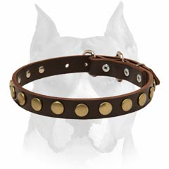 Stylish elegant leather Amstaff dog collar