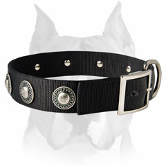 Nylon dog collar with conchos for Amstaff