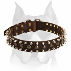 Stylish decorated Amstaff leather dog collar