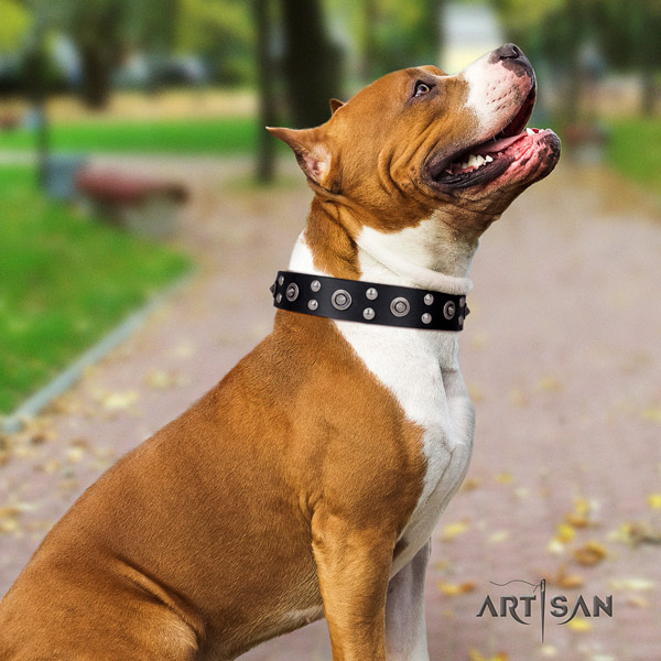 Amstaff inimitable full grain leather dog collar with embellishments for handy use