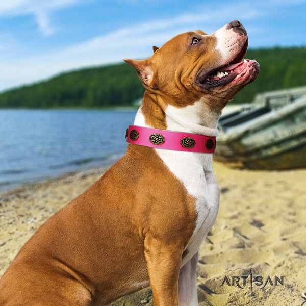 Amstaff unusual genuine leather dog collar with adornments for basic training