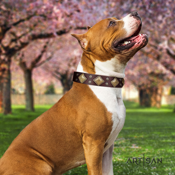 Amstaff stylish full grain leather dog collar with decorations for comfortable wearing