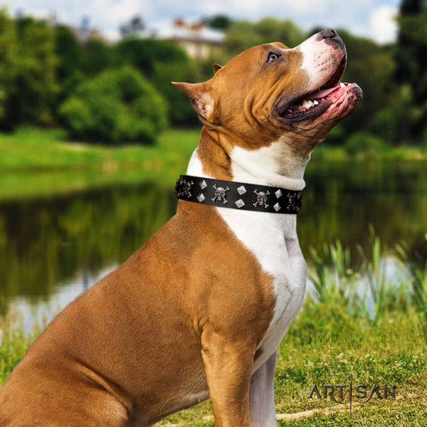 Amstaff stunning leather dog collar with embellishments for everyday use
