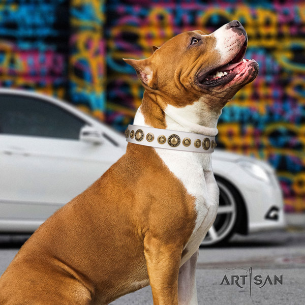 Amstaff exquisite full grain leather dog collar with adornments for handy use