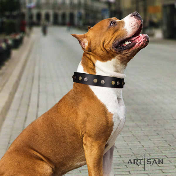 Amstaff unique full grain leather dog collar with adornments for everyday walking