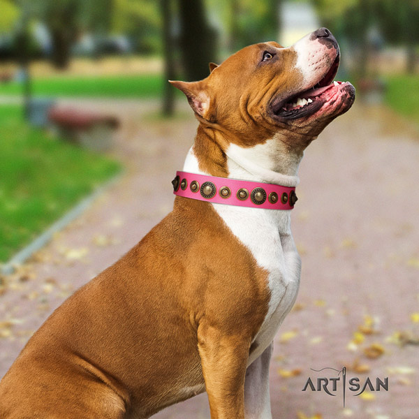Amstaff exceptional full grain leather dog collar with adornments for daily use