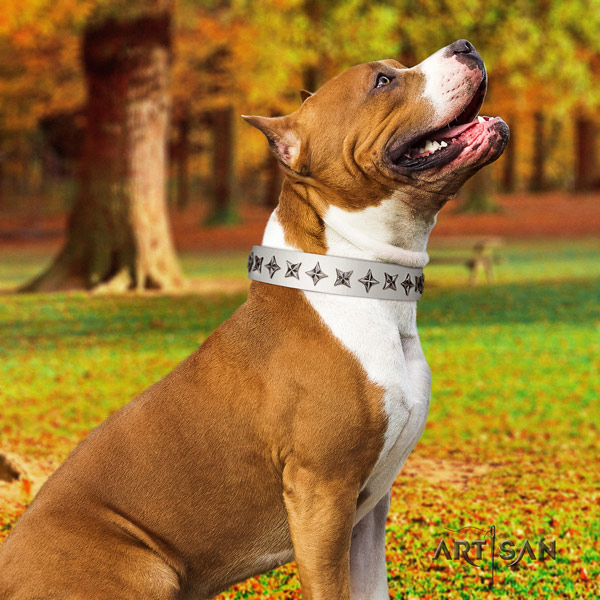 Amstaff exquisite genuine leather dog collar with embellishments for walking