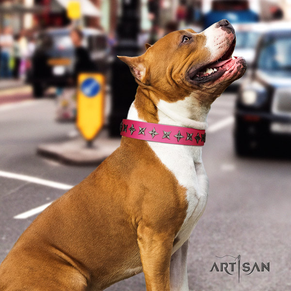 Amstaff extraordinary leather dog collar with embellishments for walking