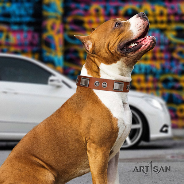 Amstaff fashionable full grain leather dog collar with decorations for handy use