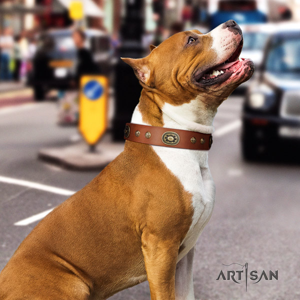 Amstaff remarkable leather dog collar with studs for daily use
