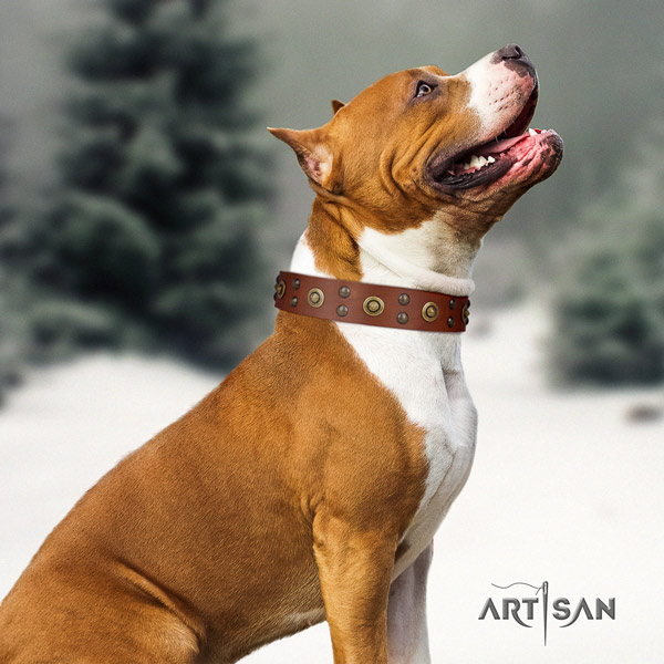 Amstaff inimitable full grain leather dog collar with adornments for everyday walking
