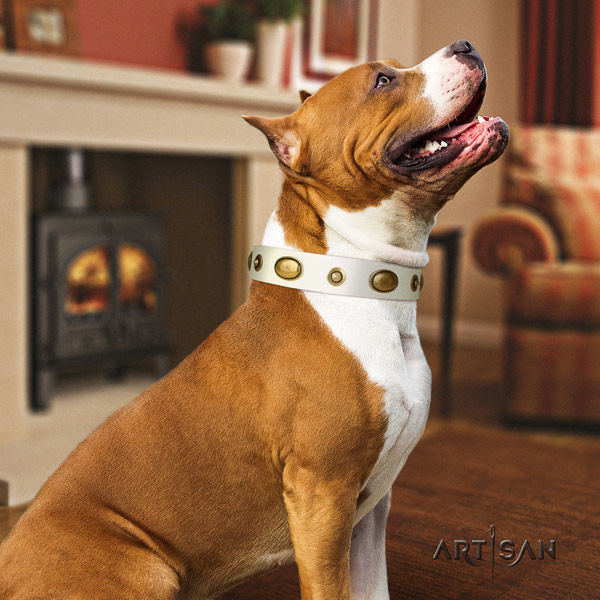 Amstaff top notch full grain leather dog collar with adornments for everyday walking