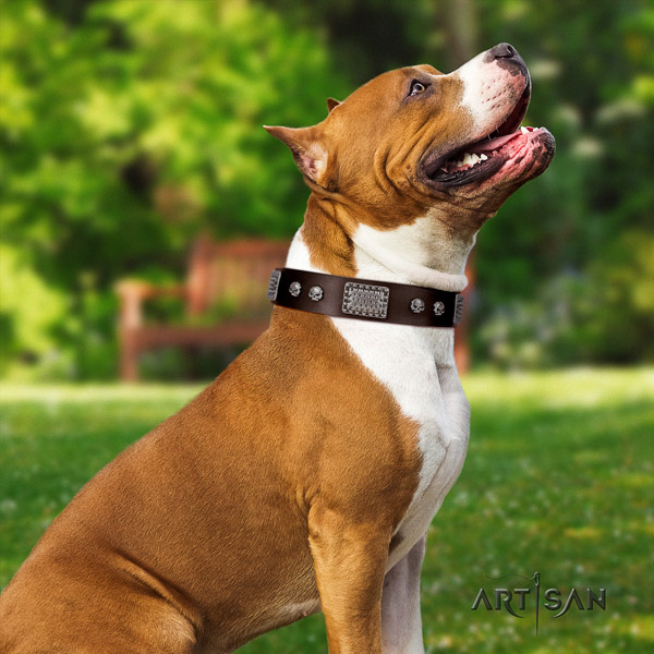 Amstaff trendy leather dog collar with adornments for walking
