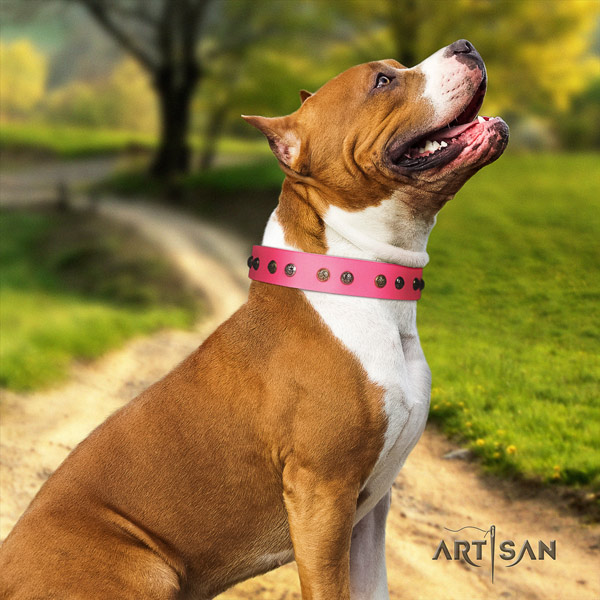 Amstaff remarkable genuine leather dog collar with adornments for easy wearing